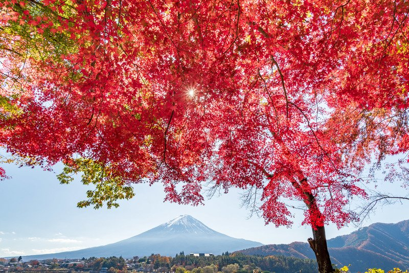 япония, фудзи, красный клен Момидзиphoto preview