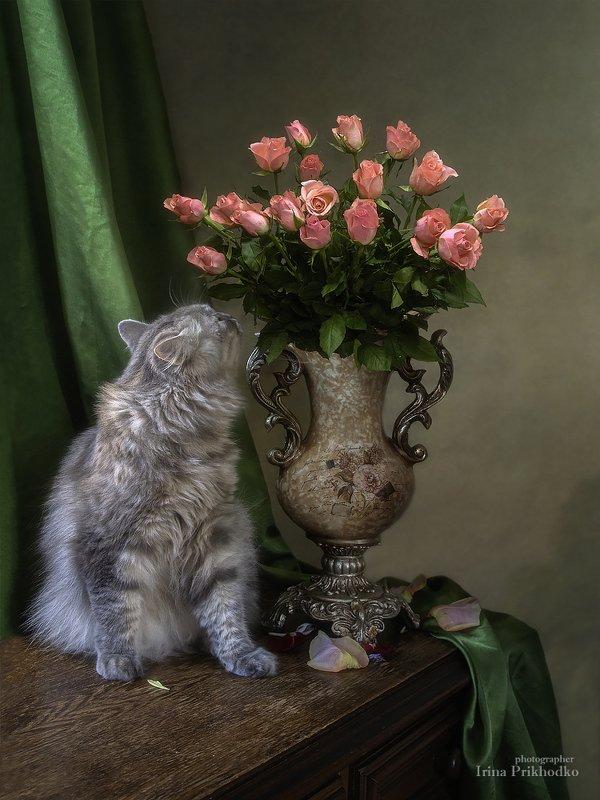 натюрморт, котонатюрморт, кошка Масяня, цветы, розы, букет Как упоительно пахнут розы!photo preview