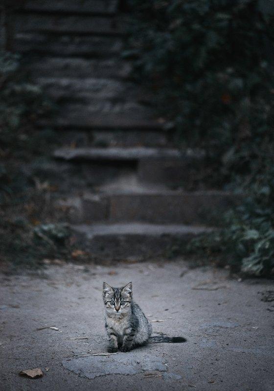 украина, коростышев, глаза, друг, душа, жизнь, кот, котенок, любовь, малыш, молчание,мысли, одиночество, печаль, ступеньки, тишина, усталость, бытие,  фотограф,чорный 6:30photo preview