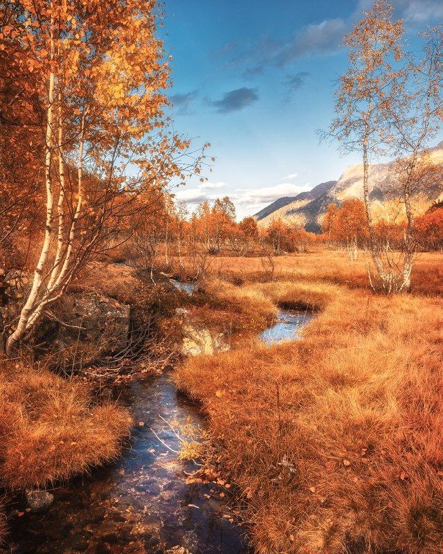 горы, осень, поход, деревья, цвета, дерево, nikon, d610, tamron, оранжевый, жёлтый ***photo preview