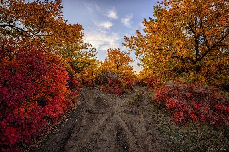 осень, листва, осенние краски, дорога, деревья, облака, природа, небо, пейзаж Осеньphoto preview