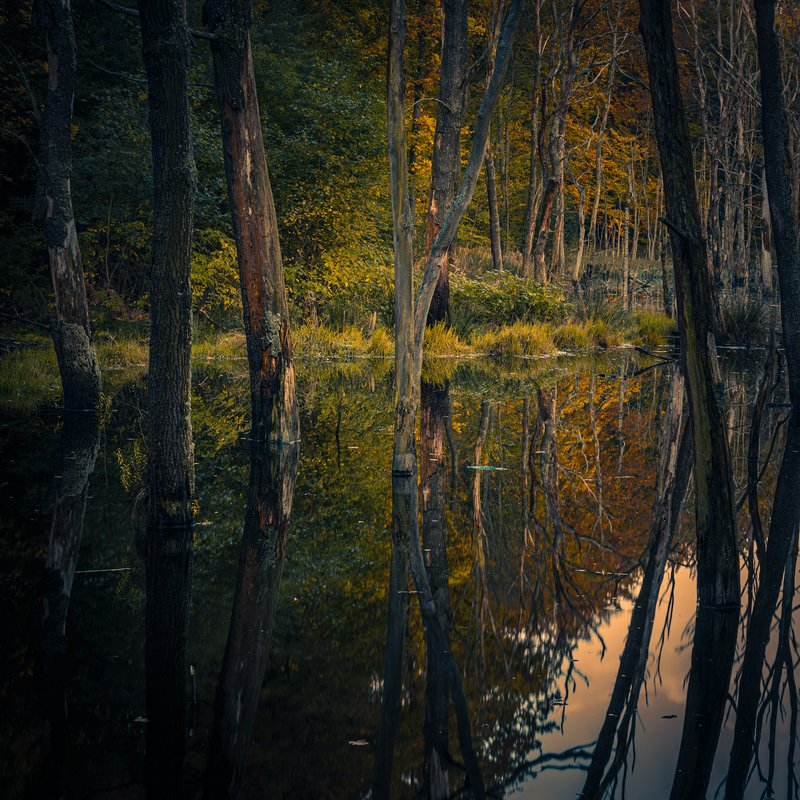 swamp, landscape, nature, water, colors, autumn, forest Silencephoto preview
