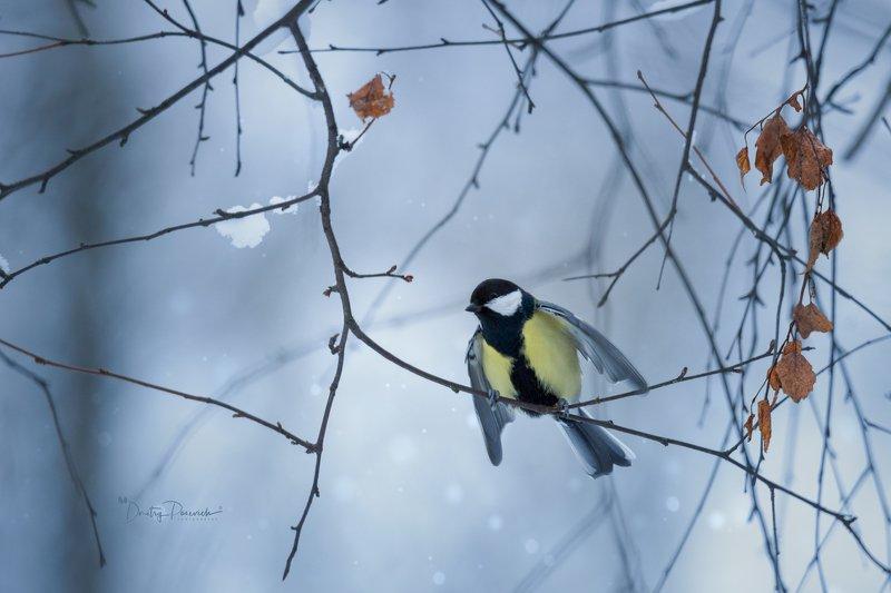 природа, лес, поля, огороды, животные, птицы, макро Ну и чем не орел ?photo preview