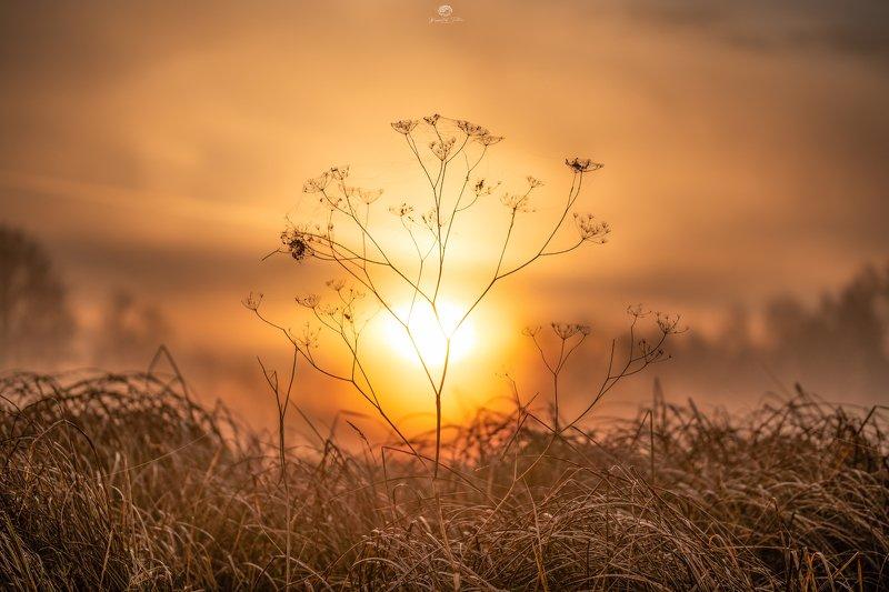 nature, beauty of nature, plant, sky, grass, sunrise, light, fog, autumn, sun, nikon, trees In the morning lightphoto preview