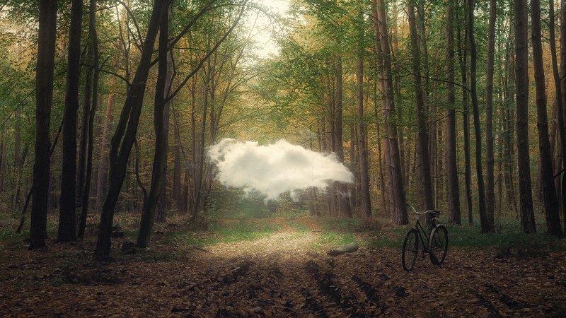 украина, коростышев, лес, душа,   небо, облако, легкие, нежные,  живые,  вознесение,  свет, взгляд в облака, любовь, летать, фотограф, чорный Душаphoto preview