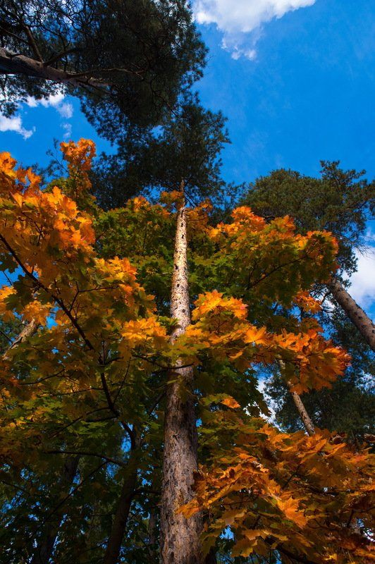 Осень 3photo preview