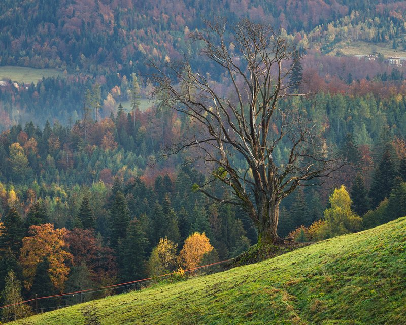 nature, autumn, landscape, colors, sunrise, beskidy, morning, foggy Treephoto preview