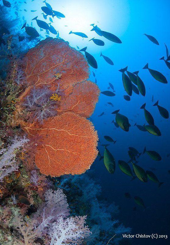 underwater, red, sea Оранжевая зеленьphoto preview
