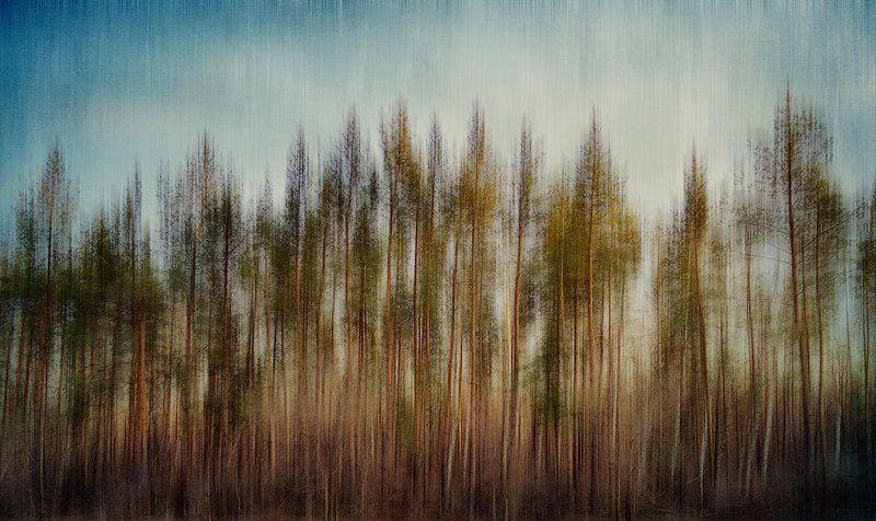 Сны природыphoto preview