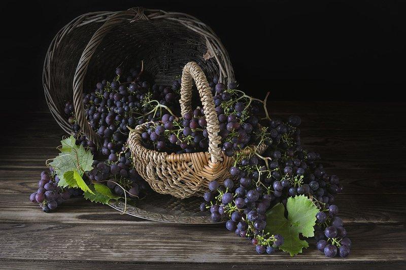 Северный виноград.photo preview