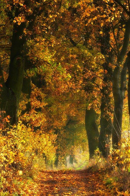 autumn, landcape, tree Autumnphoto preview