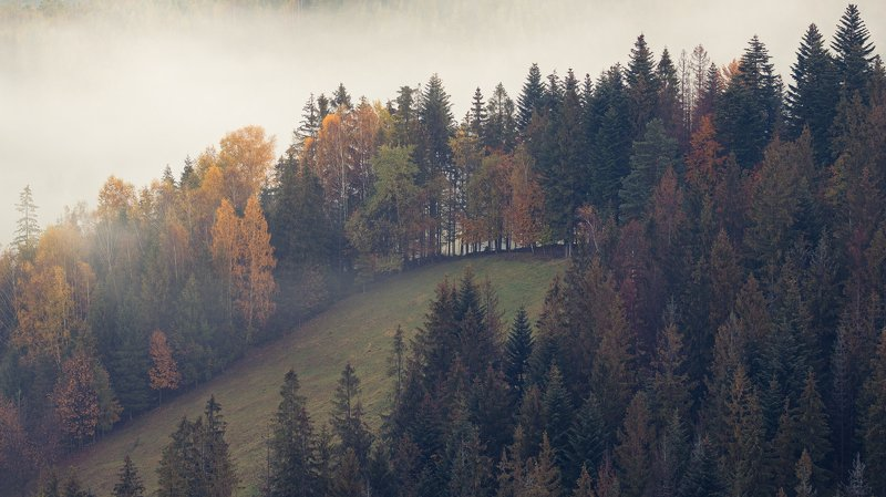 nature, autumn, landscape, colors, sunrise, beskidy, morning, foggy Foggy morningphoto preview