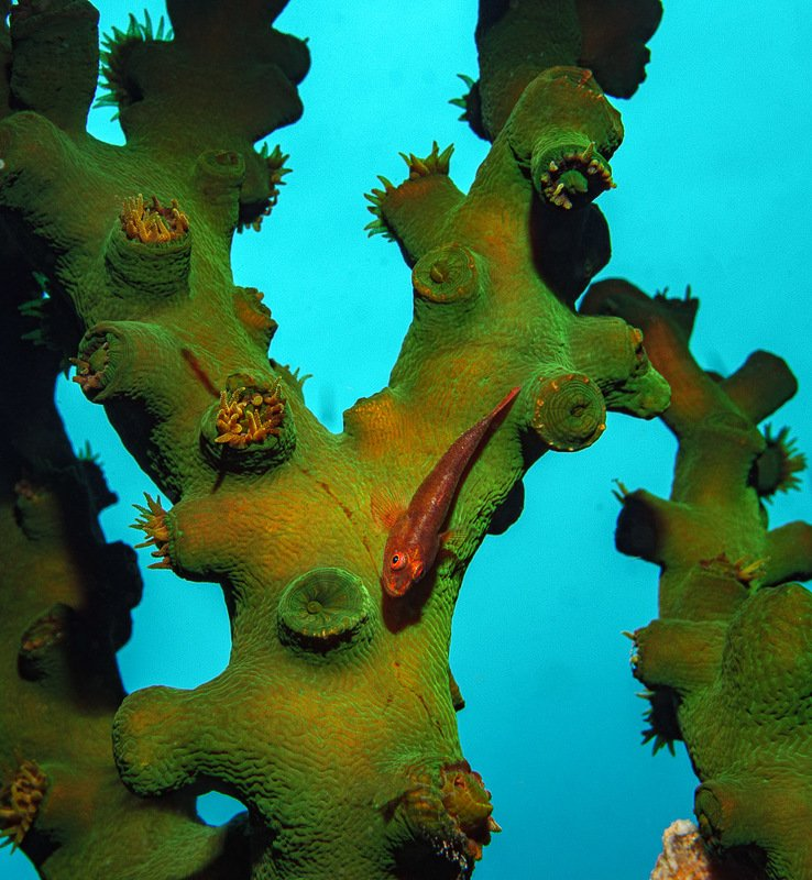 Goby on Green Tree