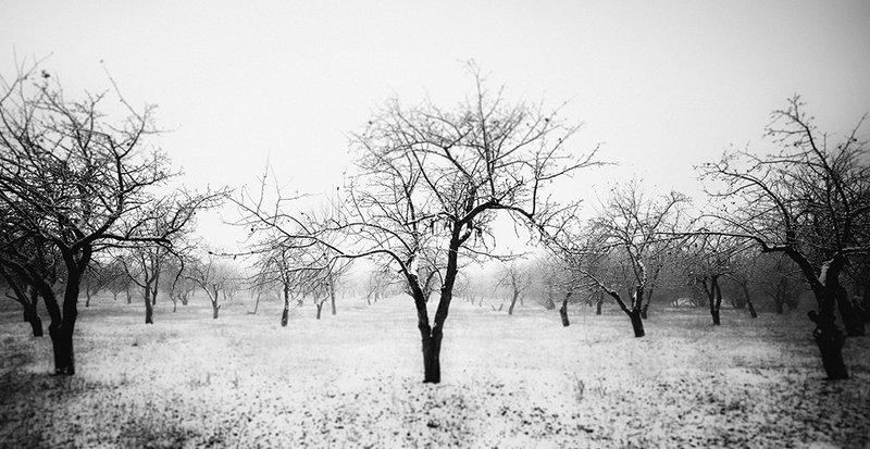 Яблоневый садphoto preview