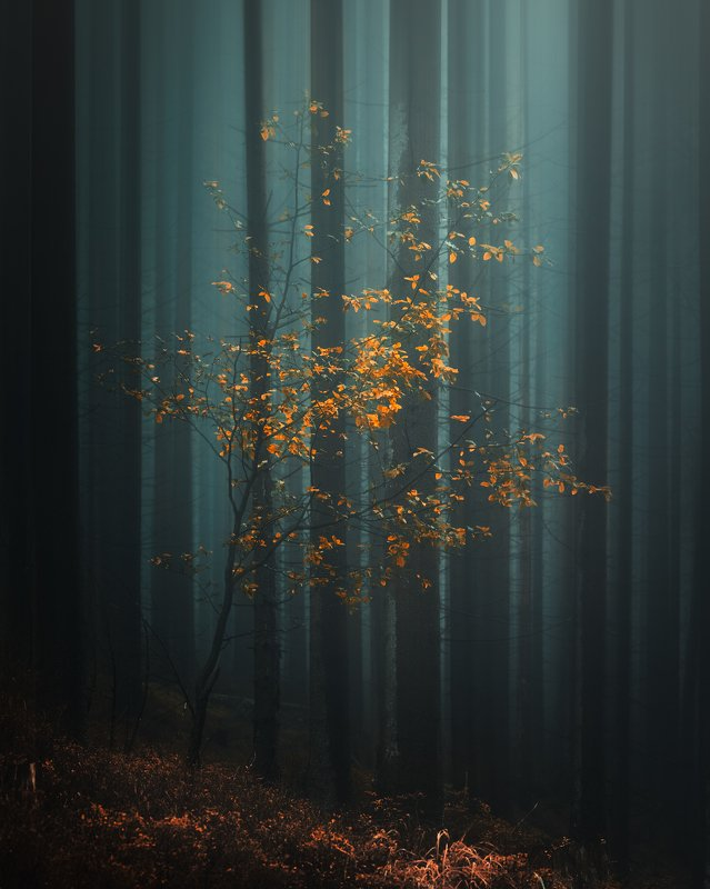 tree, forest, light, landscape, nature, moody, foggy, fog, mist, dramatic Alonephoto preview