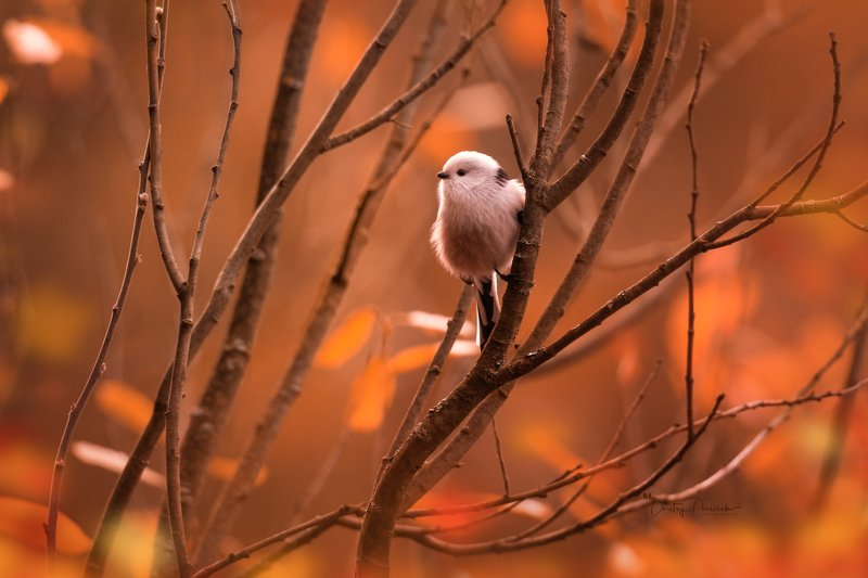 природа, лес, поля, огороды, животные, птицы, макро Прынцессаphoto preview