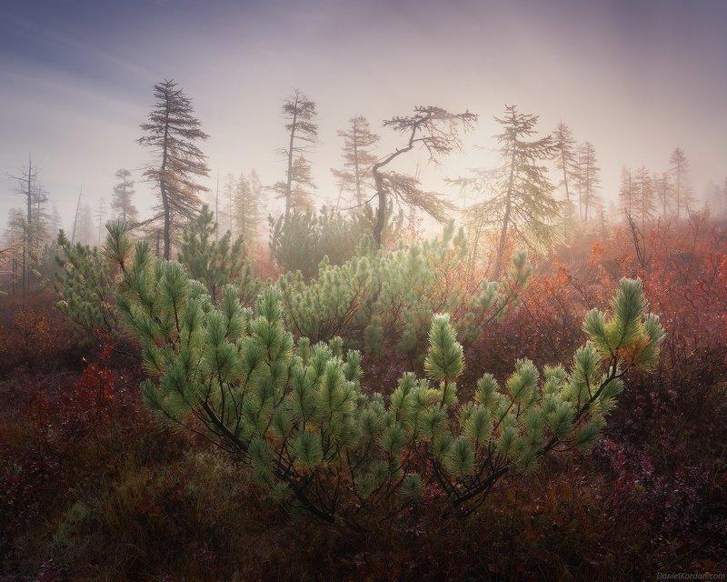 Лес Колымыphoto preview