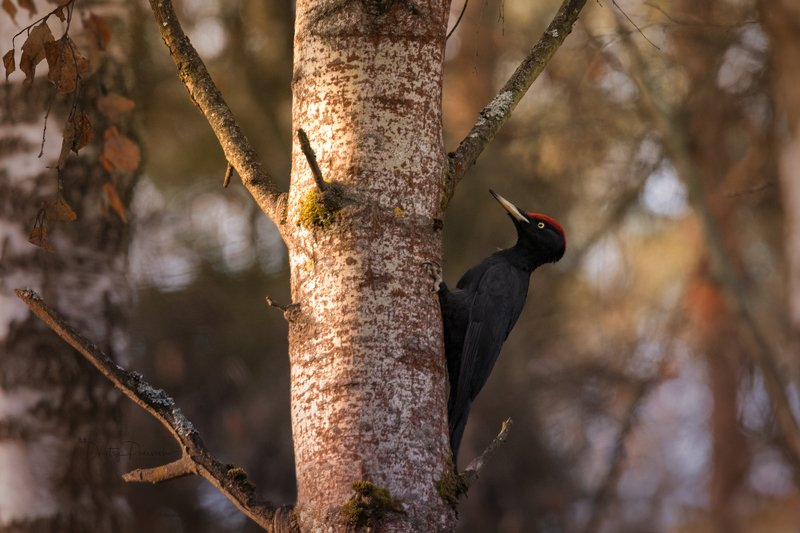природа, лес, поля, огороды, животные, птицы, макро Серьезный пареньphoto preview