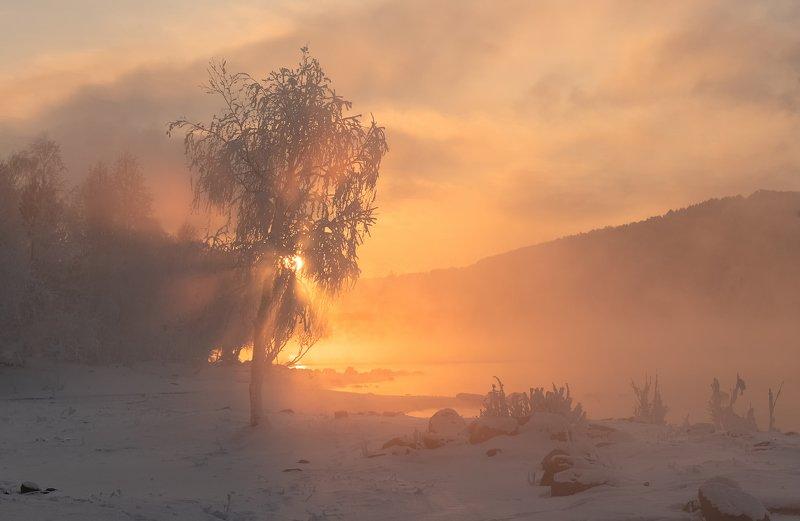 енисей, мороз, закат, береза. Березка  у реки.photo preview