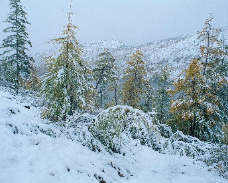 Первый снег. Озеро Танцующих Хариусов.photo preview