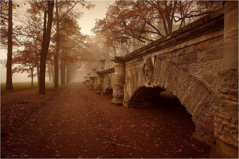 туман, парк, пруд, царское село, прогулка, турист, аллеи, осень, листва Туман в Царском Селеphoto preview