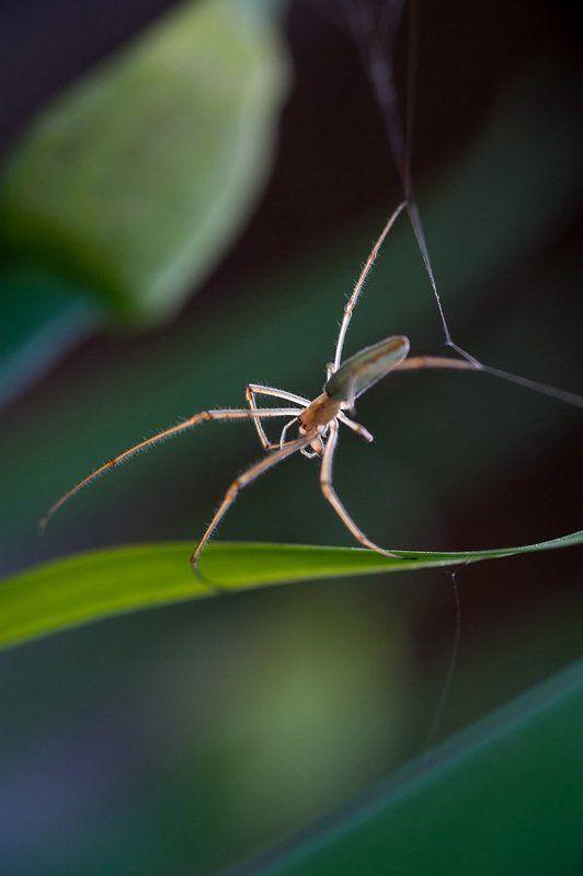 макро, паук, паутина, природа чудеса эквилибристикиphoto preview