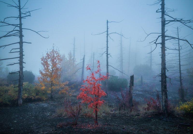 Камчатка. На границе мёртвого и живого.photo preview
