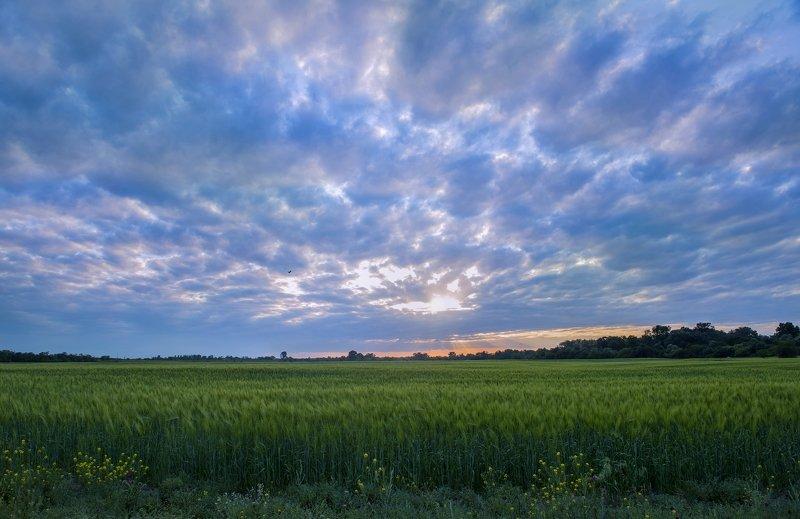 Кабардино-Балкария, Терек, Хамидия, Урожайное, хлеб, поле, Кавказ Хлебушек!photo preview