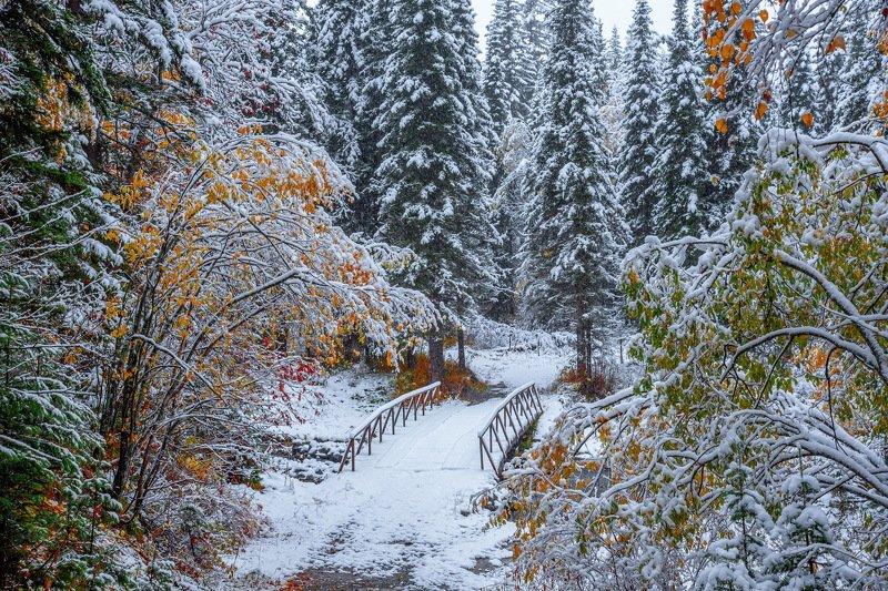 алтай. осень. горы. Осень на Рудном Алтаеphoto preview