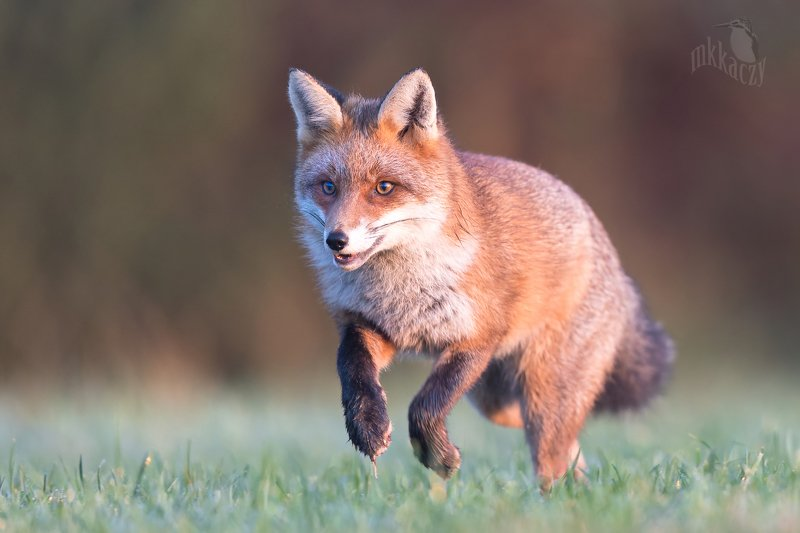 Happy foxphoto preview