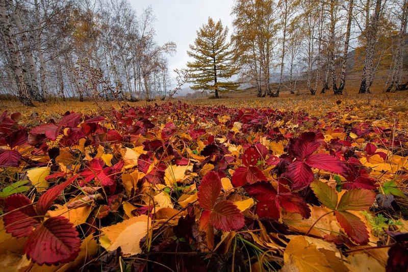 Осенний ковёрphoto preview