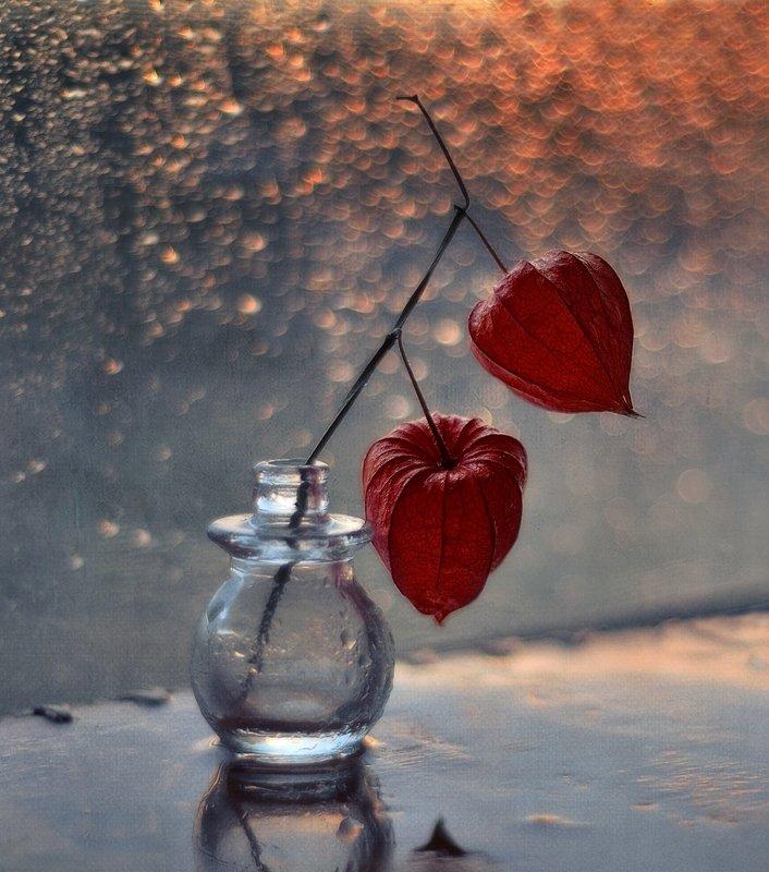натюрморт,цветы,физалис,осень,дождь,боке осень...photo preview