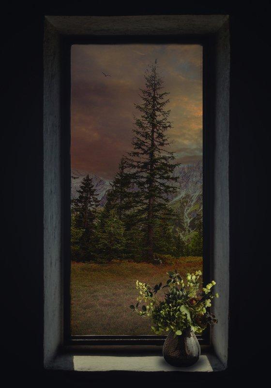 окно, лес, цветы *****photo preview