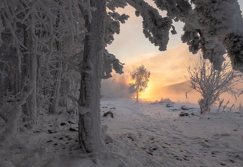 енисей, зима, лес, вечер. Зимняя сказка.photo preview