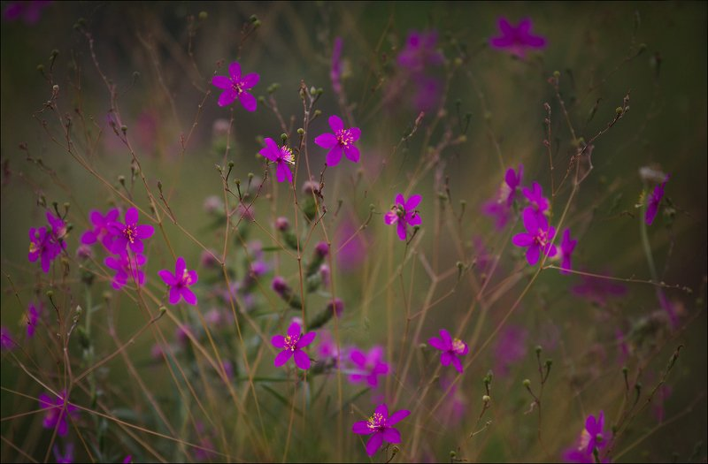 миламиронова, цветы, сонм, фантазия, природа Сонм...photo preview