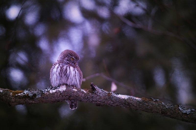 природа, лес, поля, огороды, животные, птицы, макро В поисках жертвыphoto preview