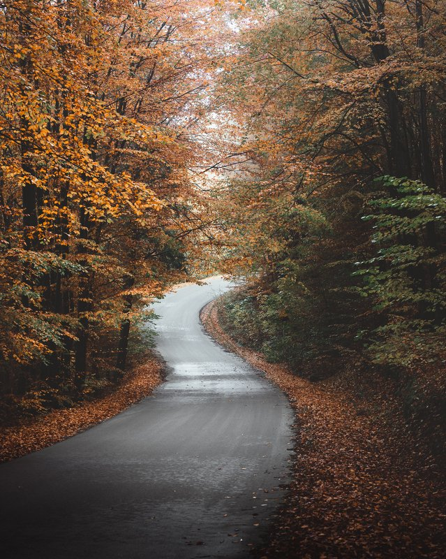 road, forest, poland, poland in the lens, autumn, fall, mood, landscape The roadphoto preview