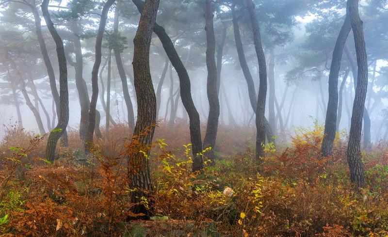 forest, light, park, trees, pine, korea, colors, tree trunk, dance Peaceful autumn morningphoto preview