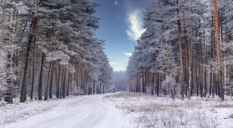 Zima, Las, Droga leśna, Drzewa, Krajobraz, Śnieg, Niebo, Chmury, Nikon, Przymrozek, Poranek, Światło, Natura First touch of winterphoto preview
