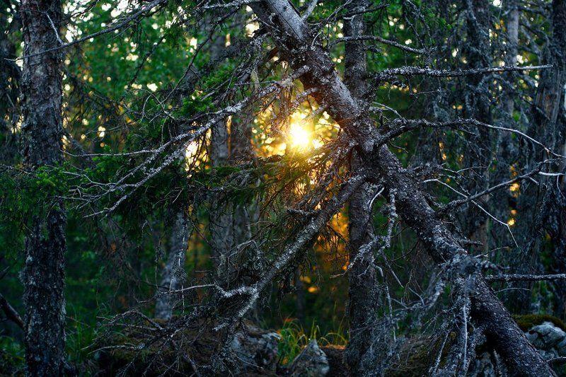 Утро в дремучем лесуphoto preview