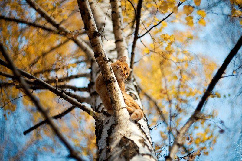 Рыжая осеньphoto preview