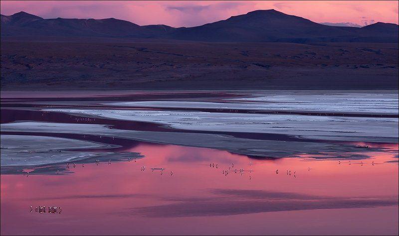 Боливия, Закат, Колорада, Лагуна, Латинская америка, Розовый, Фламинго Laguna Coloradaphoto preview