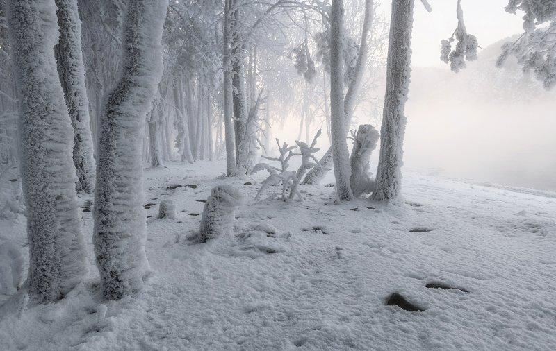 красноярск, мороз, енисей, Белоснежная зима.photo preview