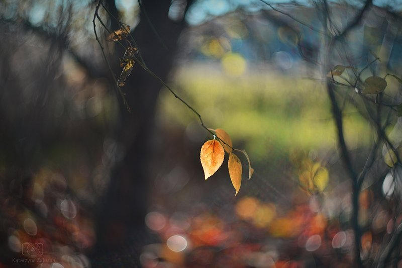 Autumnphoto preview