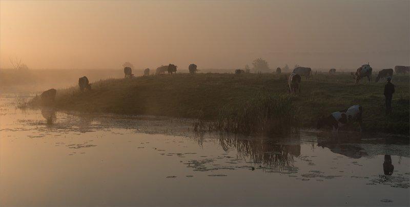 dawn pastoral...photo preview
