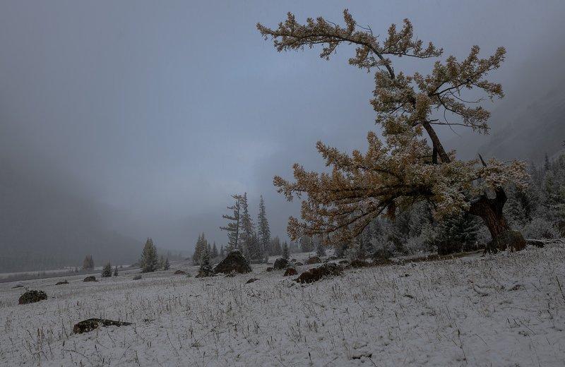 алтай.северо-чуйский хребет.,первый снег. Хмурое утро.photo preview