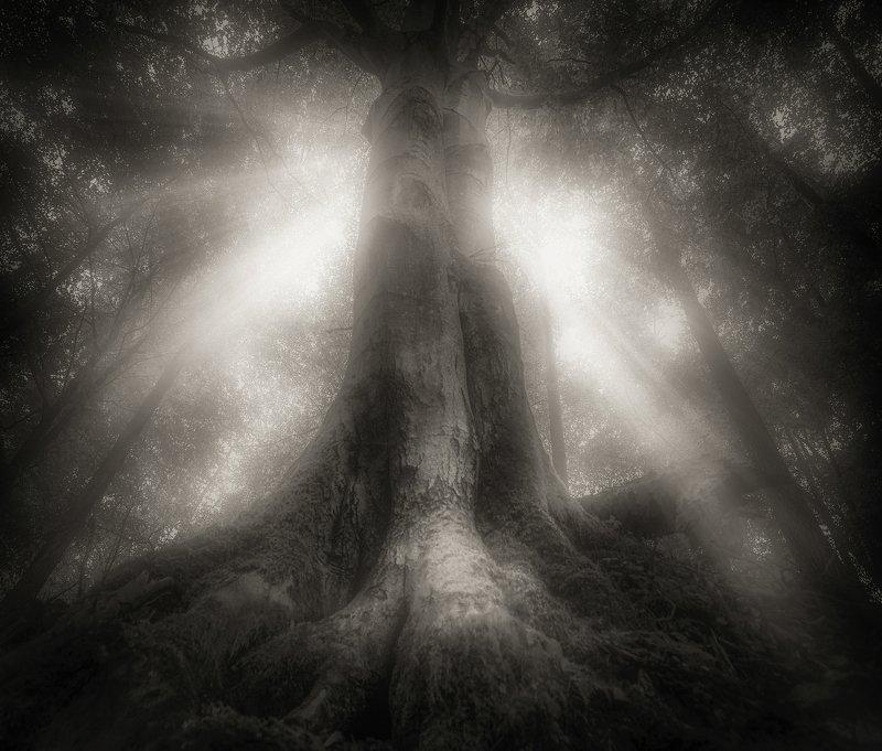 drzewo, natura, las, jesień, poranek, nikon, atmosfera, światło, promienie słońca, majestic Majestic - B&Wphoto preview