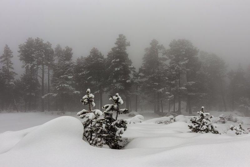 горы, эльбрус,кавказ,туман small Christmas trees...photo preview