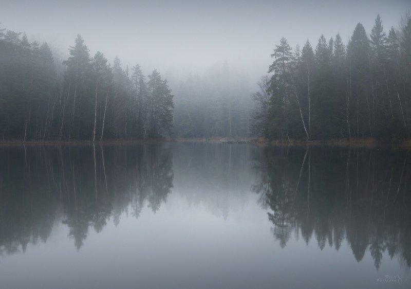 Ленинградская область, северный лес, ноябрь, зима, декабрь, туман, озеро, отражение, кружевной лес, абстракции Невесомостьphoto preview
