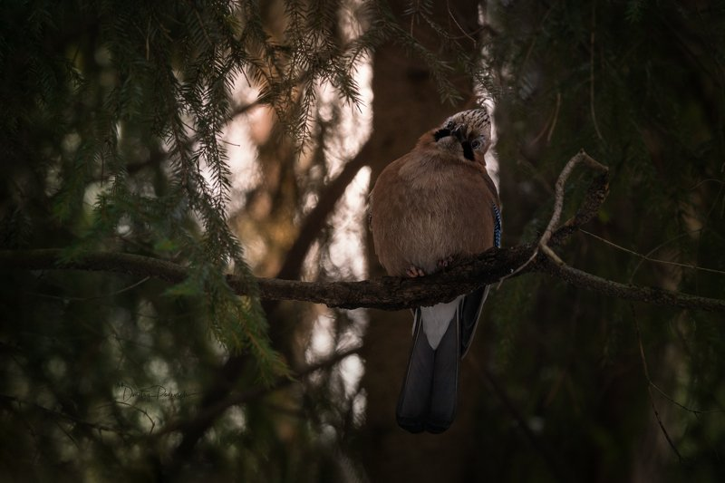 природа, лес, поля, огороды, животные, птицы, макро Кокеткаphoto preview